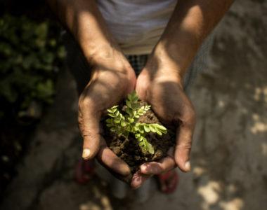 A importância da compostagem para o Meio Ambiente