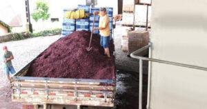 As Vinícolas produzem uma quantidade expressiva de resíduos