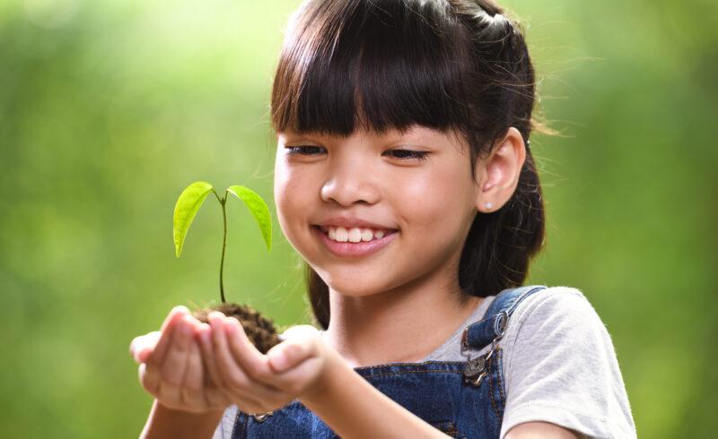 O Dia Mundial do Meio Ambiente e seus desafios